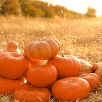 The Incredible Health Benefits of Pumpkins