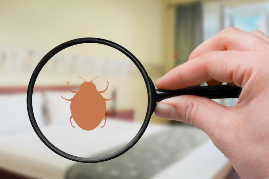 Popular Home Remedies for Bed Bugs