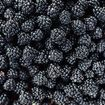 Blackberry-Related Hepatitis A Outbreak in Six States