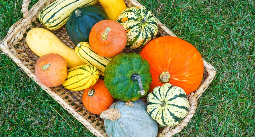 The Incredible Health Benefits of Your Favorite Fall Foods and Spices