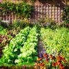How To Start A Small Backyard Garden