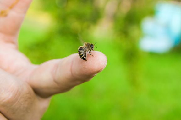 How to Care for Bee, Wasp, and Hornet Stings