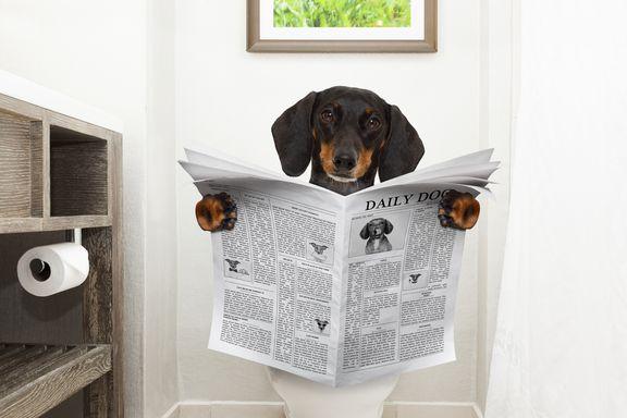 Remedios caseros para el estreñimiento en perros