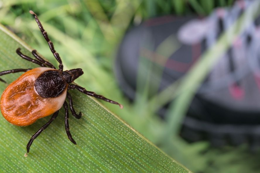 Everything to Know About Ticks