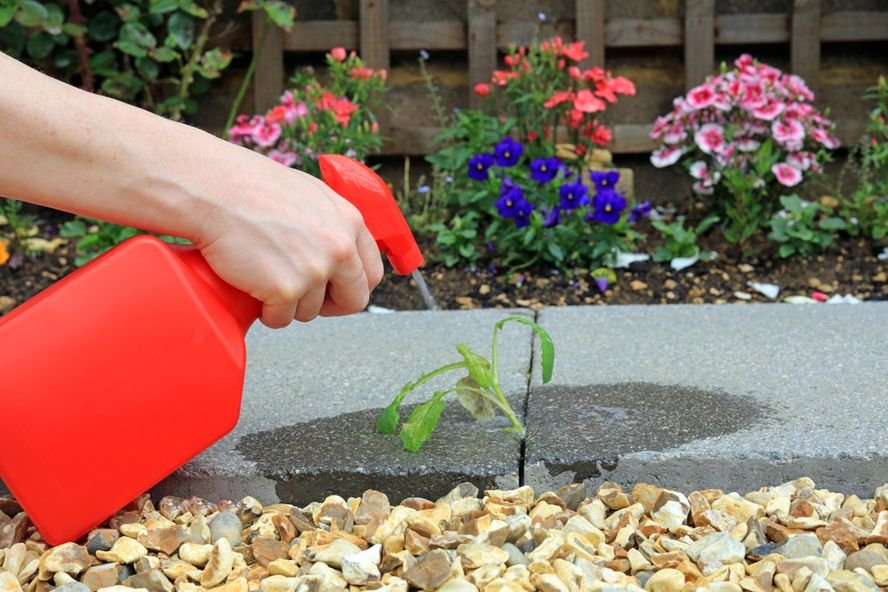 Natural Ways to Keep Weeds Out of Your Garden