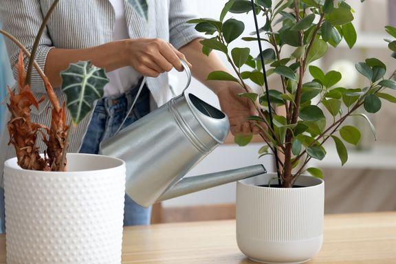 How to Start an Indoor Garden & Top Plants to Grow