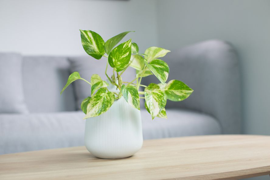 Poisonous Houseplants That Are Toxic to Children and Pets