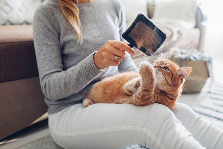 Hairballs in Cats: Symptoms, Causes, and Treatment